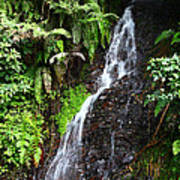 Yungas Waterfall Art Print