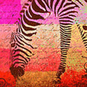Zebra Art - T1cv2blinb Art Print