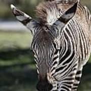 Zebra Crossing V7 Art Print