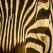 Zebra Eye Art Print by Jennifer Burley