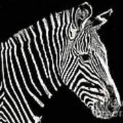 Zebra Faa Contest Art Print
