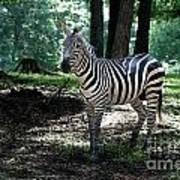 Zebra Forest 2 Art Print