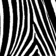 Zebra Hide Art Print
