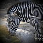 Zebra I Art Print