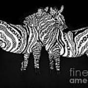 Zebra Love 1 Art Print