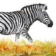 Zebra Panoramic Art Print