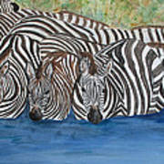 Zebra Pool Art Print