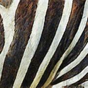 Zebra Texture Art Print by Ayse Deniz