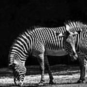 Zebra Unique Patterns Art Print