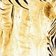 Zebra Up Closer Art Print