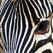 Zebra Vibrations Art Print