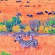 Zebras Above The Beast Art Print