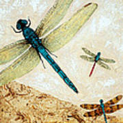 Zen Flight - Dragonfly Art By Sharon Cummings Art Print