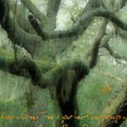 Zen Forest Art Print