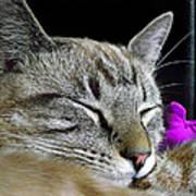 Zing The Cat Sleeping Art Print