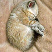 Zing The Kitten Art Print