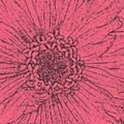 Zinnia In Pencil  Art Print