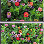Zinnias 4 Panel Vertical Composite Art Print