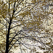 Branch Of Tree In Autumn Art Print