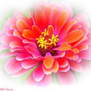 Flower On White Art Print