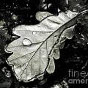 Leaf Art Print by Odon Czintos