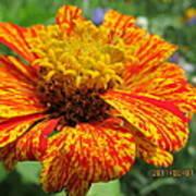 Lovely Orange Speckles Art Print