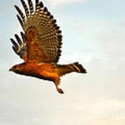 Majestic Red Shoulder Hawk Art Print