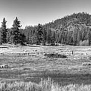 Prairie In South Lake Tahoe Art Print