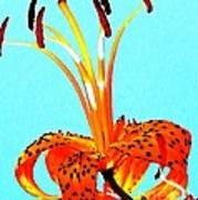 Turquoise And Tiger Lily Art Print