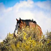 Wild Horse In The Sage Art Print