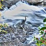0005 Blue Heron At Glen Falls Williamsville Ny Art Print