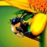 002 Sleeping Bee Series Art Print