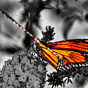 014 Making Things New Via The Butterfly Series Art Print