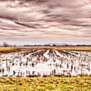 0704-8703 Winter Clouds At Holla Bend Wildlife Refuge Art Print