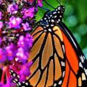 007 Making Things New Via The Butterfly Series Art Print