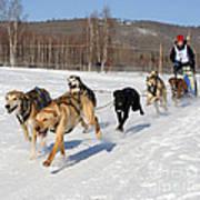 2010 Limited North American Sled Dog Race Art Print
