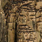 A Colony Of Little Auks Line Jagged Art Print