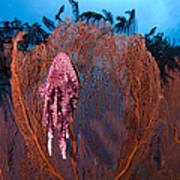 A Red Sea Fan With Sponge Colored Clam Art Print
