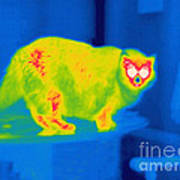 A Thermogram Of A Long Haired Cat Art Print