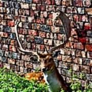 Against The Wall Art Print by Isabella F Abbie Shores FRSA