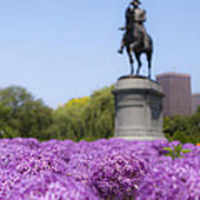 Allium Flower At The Boston Common Art Print
