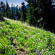Alpine Meadow Vii At Mount Rainier Art Print