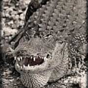 American Alligator Art Print