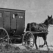 Amish Buggy Black And White Art Print