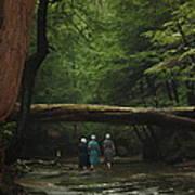 Amish Creek Hike Art Print