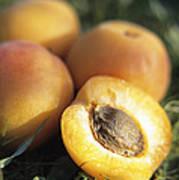 Apricots Art Print by Veronique Leplat