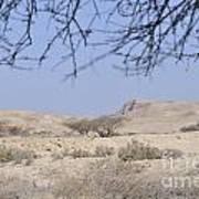 Aravah Desert Landscape  Art Print