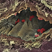 Artery Sem Art Print