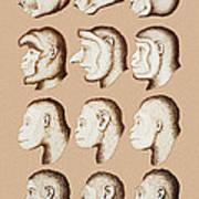 Artwork Of Twelve Catarrhines, 1870 Art Print by Mehau Kulyk