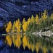 Autumn, Alpine Larch Trees, Lake Agnes Art Print
